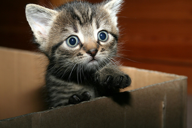 Big Eyes Cat cat pictures