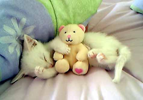 Cute Cat cat pictures