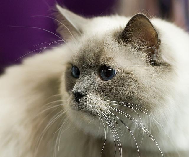 Old Cat cat pictures