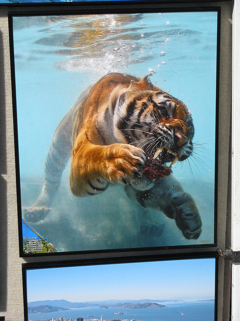 Best tiger pictures