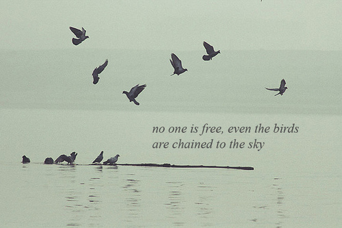 No one is free, even birds are chained to the sky inspirational quotes