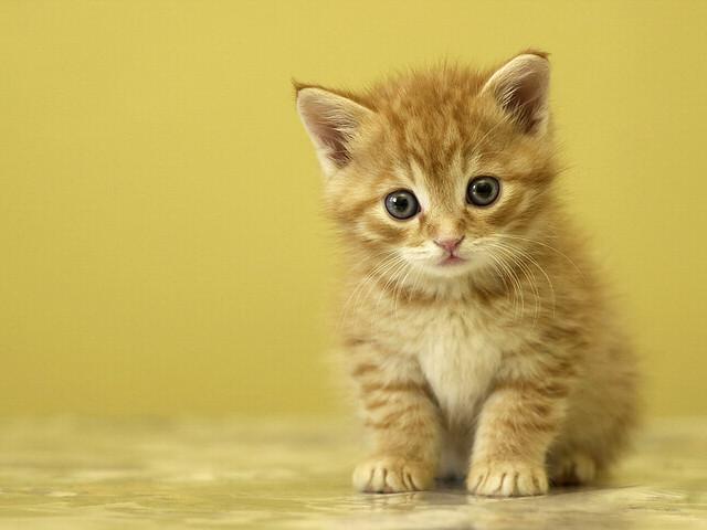 Innocent Cat cat pictures