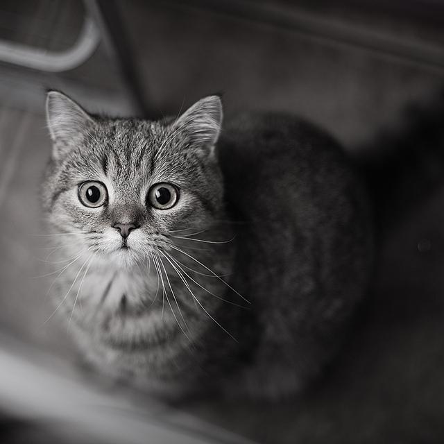 Sweet cat cat pictures