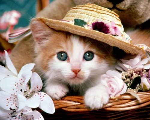 Good Looking cat pictures