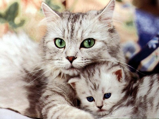 Cat And Baby cat pictures