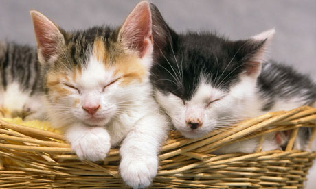 Very Young cute cats