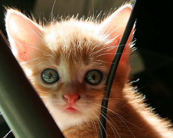 50 Beautiful And Cute Cat Pictures Funlava Com