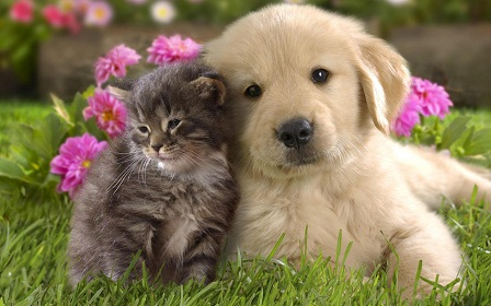 Dog And Cat Love cute cats
