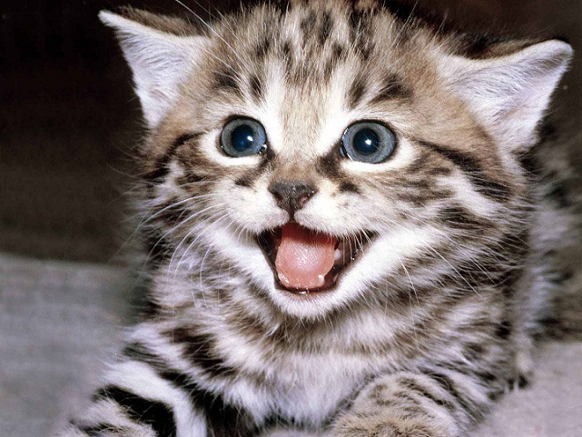 Open Mouth cute cats