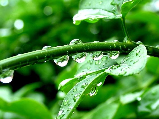 Dew Drops nature pictures