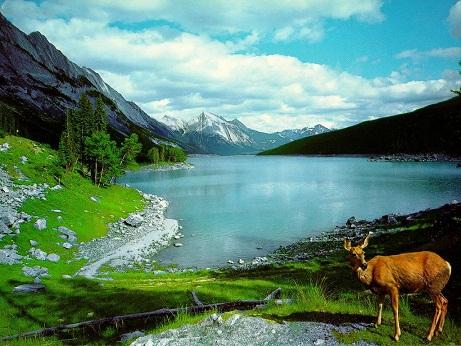 Sad View nature pictures
