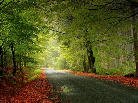 Deep Road nature pictures