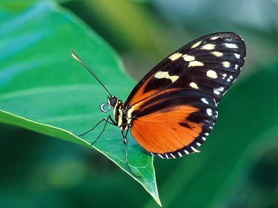 Butterfly nature pictures