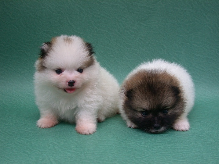 Baby dogs pictures