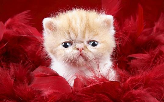 Innocent cute cats