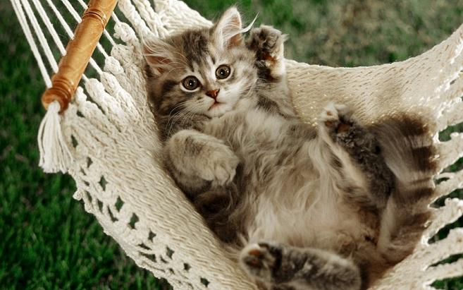 Lovely Cat cat pictures