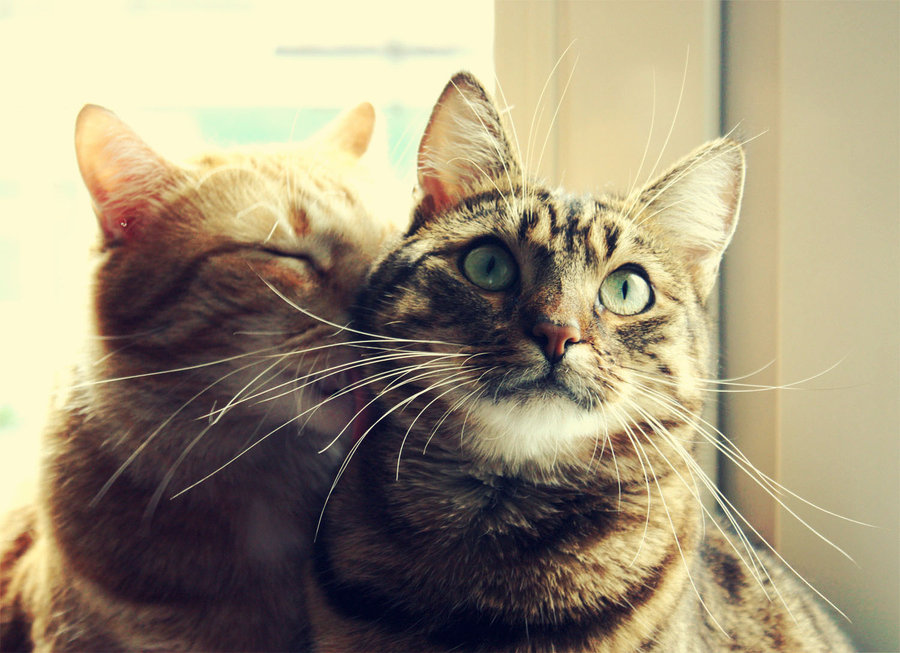 Loving Cats cat pictures
