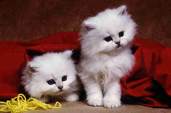 Very Young cat pictures