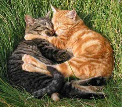 Loving Couple cute cats