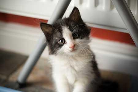 Lonely Cat cat pictures
