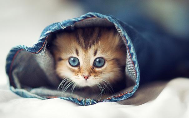 Smart Beauty cute cats
