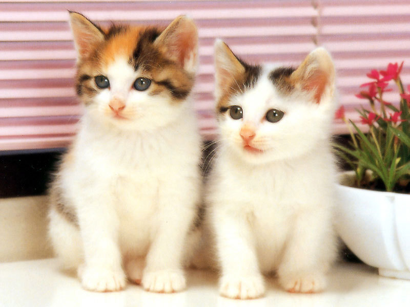 Baby Cats cat picture
