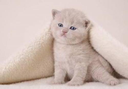 Toy Cat cat pictures