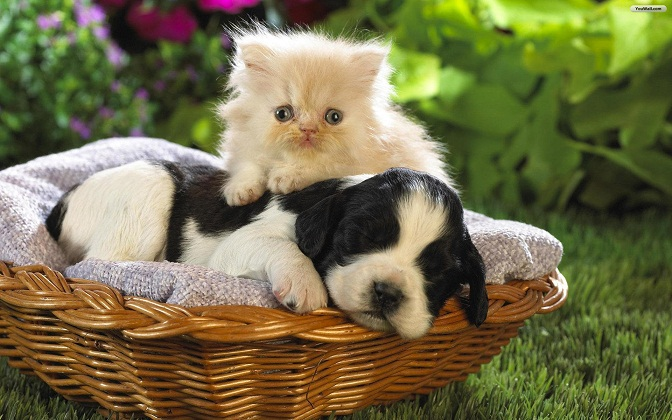 Dog And Cat cat images