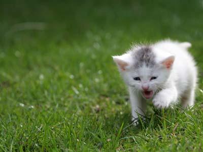 Cat In Greenery cute cats