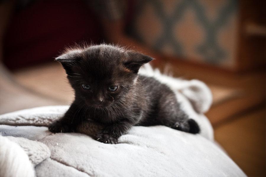Black cute cats