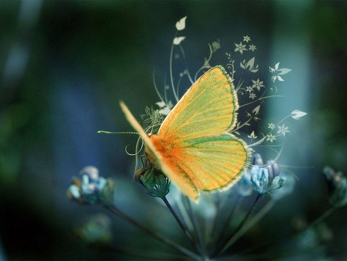 Butterfly cool backgrounds