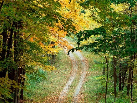 Love Road nature images