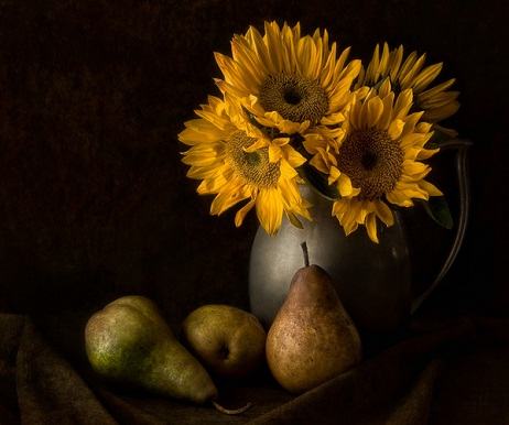 Sunflower nature pictures