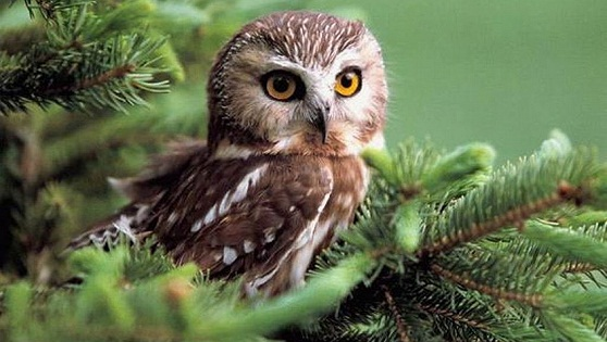Cute pictures of owls