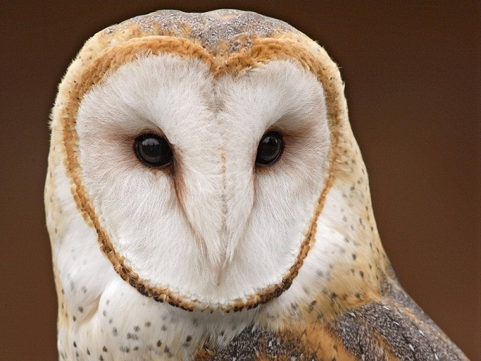 Smart pictures of owls