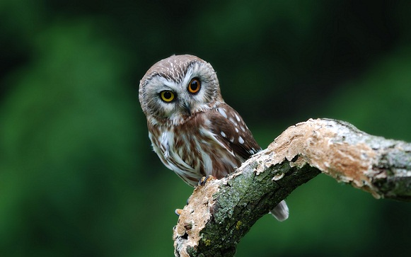 Cool pictures of owls