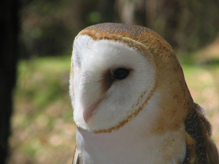Smart owl pictures