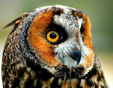 Colorful owl pictures