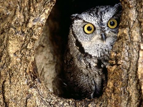 Hidden owl picture