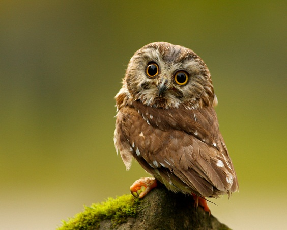 Innocent pictures of owls