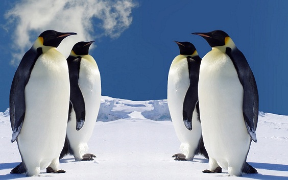 Equal penguin pictures