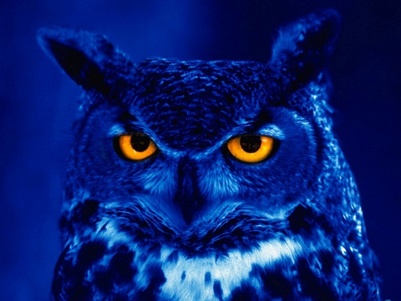 Night Owl owl images