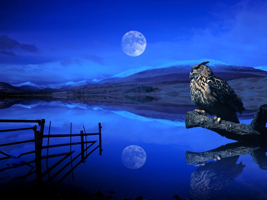Romantic View owls