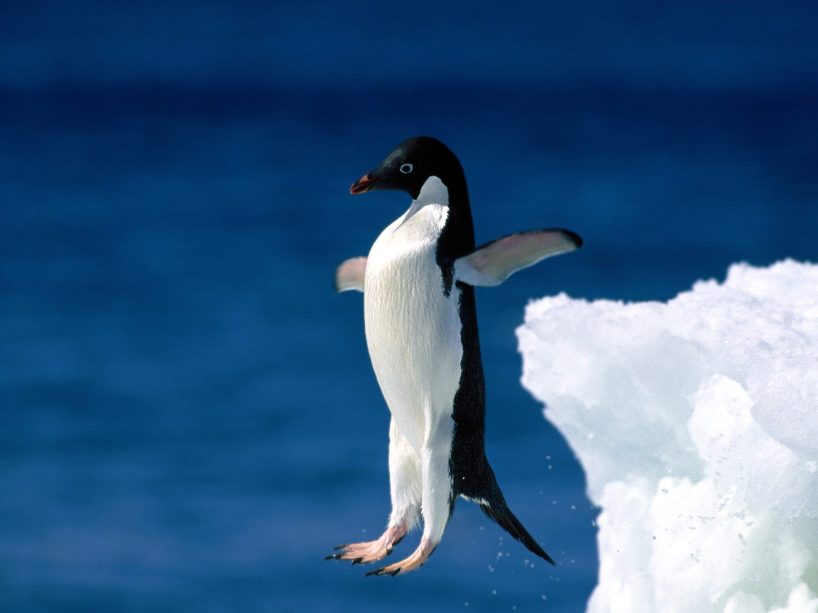 Dangerous pictures of penguin