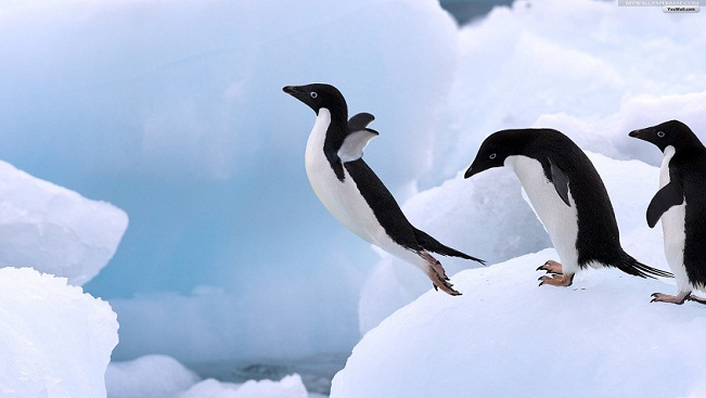 Flying pictures of penguins