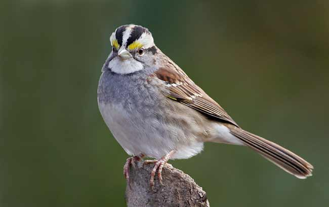 Unique sparrows