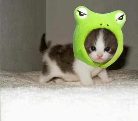 Smart Cat cat pictures
