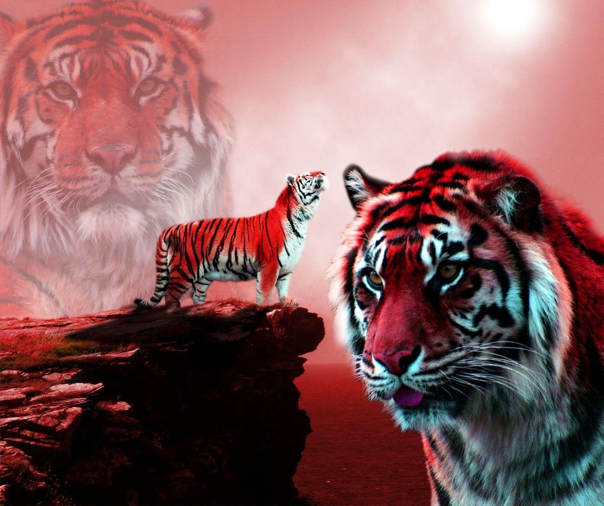 Tiger Image Tiger Images