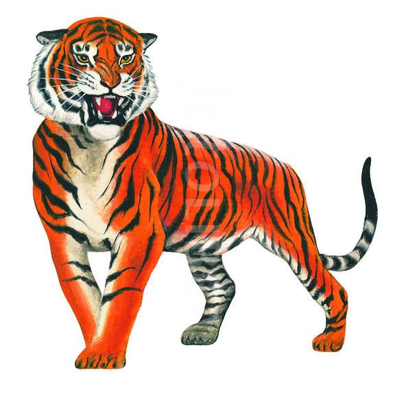 Tiger Art tiger images