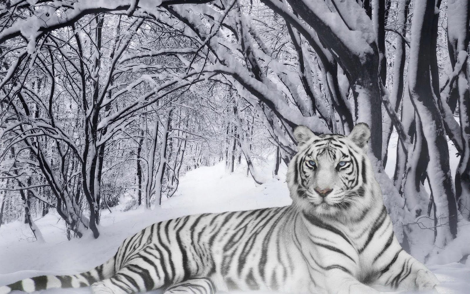 Snow White tiger images
